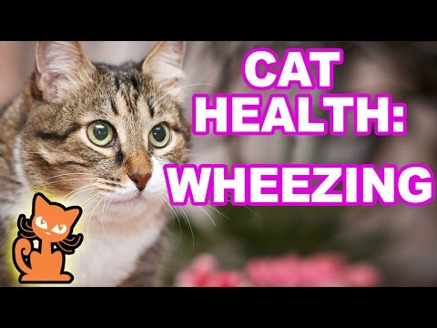 Cat Making Wheezing Sound