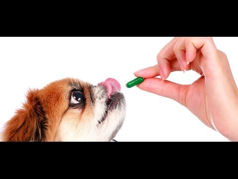 Как дать собаке таблетку от глистов - YouTube