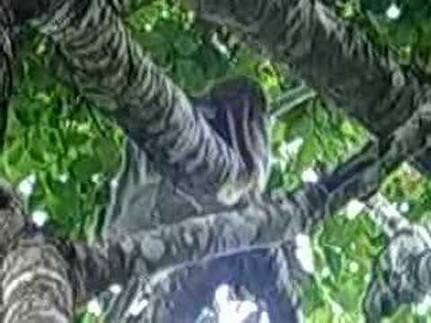 Monkey grabs woman s breastsKaynak: YouTube · Süre: 47 saniye