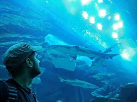 FULL TOUR of DUBAI Aquarium & Underwater Zoo   Dubai Tourist Attractions