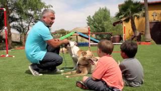 Backyards Just Got Better: Cesar Millan Introduces Easyturf For Pet Owners