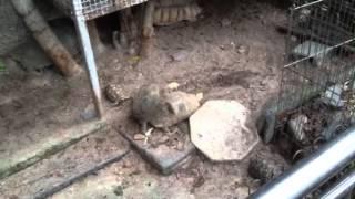 Having fun turtles Thumbnail