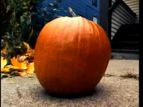 The Life and Death of a Pumpkin [sent 62 times]