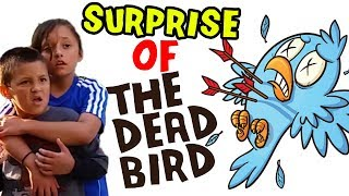 Sleeping Bird Surprise