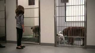Damien Toogood's Short Film for Sydney Dogs & Cats Home