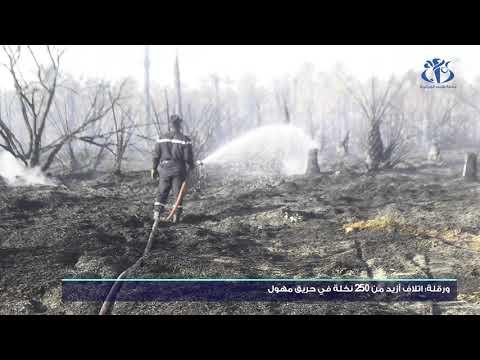 ورقلة: اتلاف أزيد من 250 نخلة في حريق مهول
