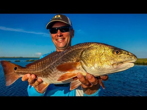 Underfished marsh crawling with redfish