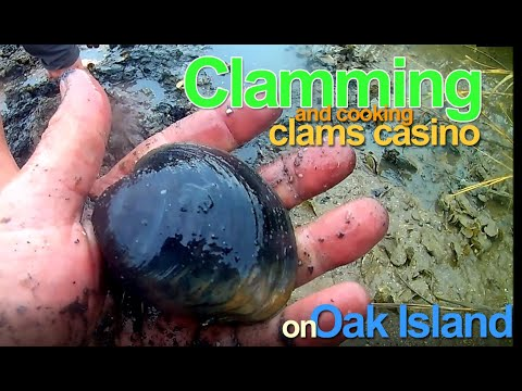 Clamming And Clams Casino On Oak Island