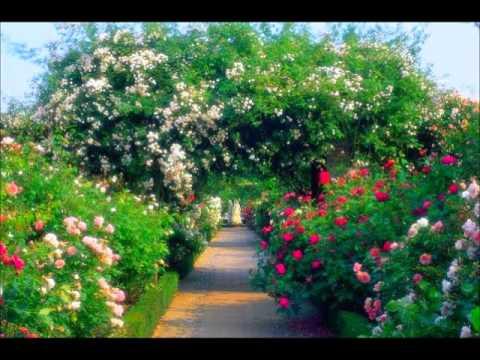 Flores y jardines del mundo flowers gardens of the world for Plantas y jardines