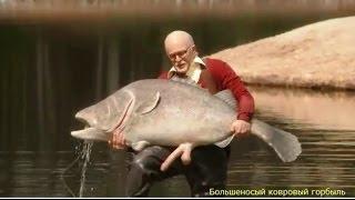 Моби Дик или Большеносый ковровый горбыль Moby Dick or snouty carpet croaker 2013