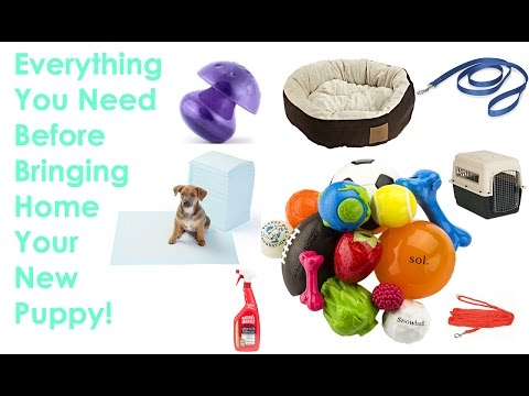 Everything You Need Before Bringing Your New Puppy Home