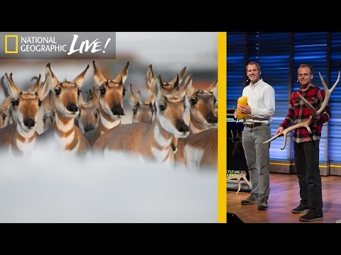 Photographing Animal Migrations, the Heartbeat of Yellowstone | Nat Geo Live