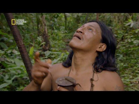 La chasse au singe-araignée chez les Huaorani