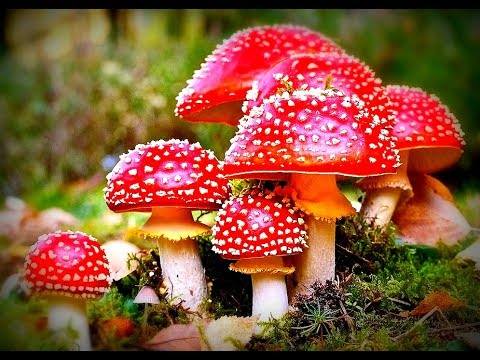 Mushroom Mythology, Magic Shrooms & The Super Mario Connection!