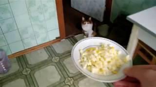 Что делать если кошка отказывается есть