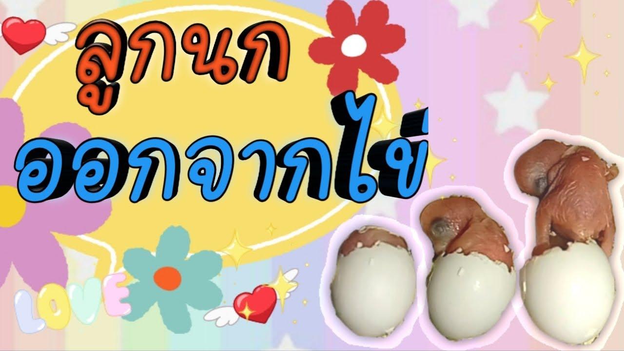 #ลูกนกออกจากไข่ #วินาทีชีวิตน้อยๆ