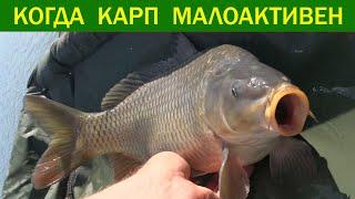 Рыбалка Когда карп малоактивен