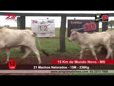 Lote 12   21 Machos
