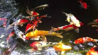 My Pond. G k_lmg lou 16/07/2011