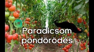 Paradicsom és prostatitis