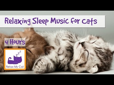 4 Hours of Relaxation Sleep Music for Cats! Perfect for Reducing Anxiety in Cats 🐱 #ANXIETY07