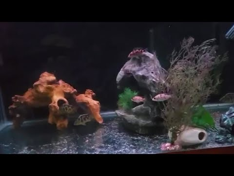 How To Treat Fish For Fungus And Fin Rot