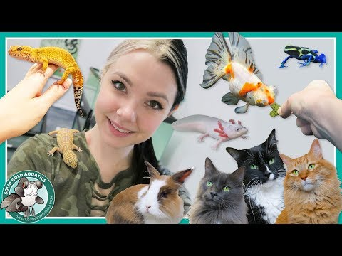 Feeding All My Pets! // VLOGMAS DAY 8