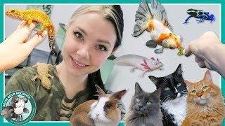Video Feeding All My Pets! // VLOGMAS DAY 8 download MP3, 3GP, MP4, WEBM, AVI, FLV Januari 2018