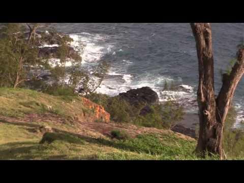 Kalama the Laysan Albatross Chick Fledges! – June 29, 2017