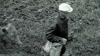 Karjalan evakuointi sota-aikana