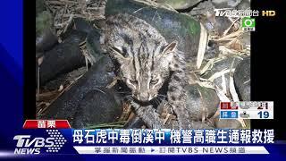 母石虎中毒倒溪中  機警高職生通報救援