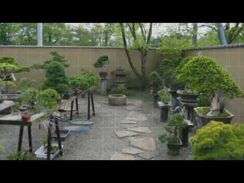 Jardins de bonsa youtube for Bonsai de jardin