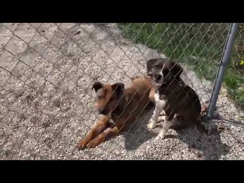 Buddy and June - They need a home!!