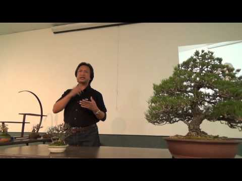 Peter Macasieb on Preparing Bonsai for a Show