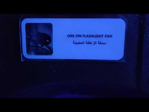 """[video] My Visit To """"dubai Aquarium!"""" Flash-light Fish"""