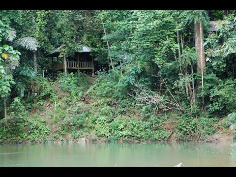 Mengenal kehidupan liar Taman Nasional Bukit Barisan Selatan