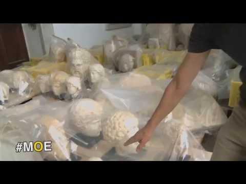 #MOE : Le musée du Bardo en Tunisie rouvre la salle de Carthagede YouTube · Durée:  2 minutes 21 secondes