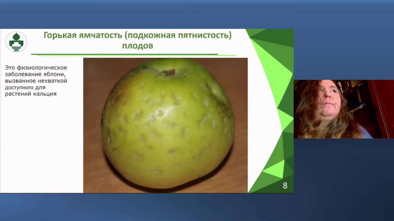 Основные болезни и вредители яблони   презентация н. с.  ВНИИБЗР  И. В. Балахниной