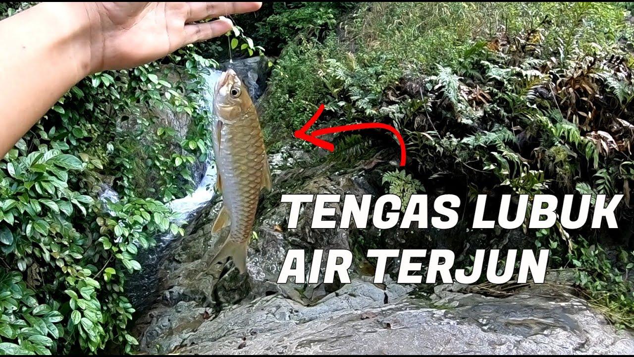 MEMBURU TENGAS Lubuk Air Terjun - Camping Malaysia Fishing Catch & Cook !