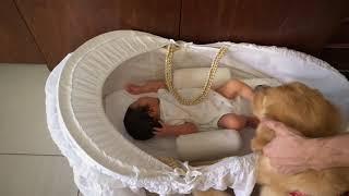 Golden retriever meets its newborn human