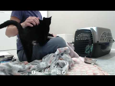 INTAKE: Pregnant mom + daughter cats rescued from hoarding - TinyKittens.com