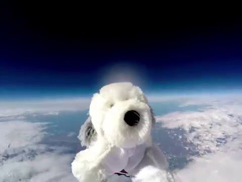 Sam the Dog gets sent into Space with a GoPro