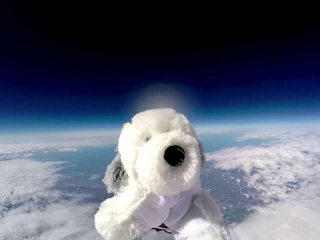 Sam The Toy Dog Is Lost After Being Sent Into Space
