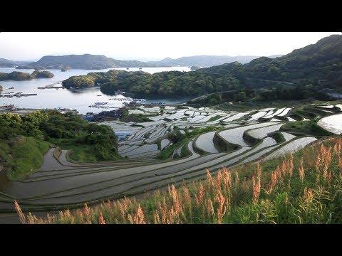 Rice Terraces in Japan [大浦の棚田/唐津市肥前町]