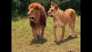 самые красивые животные!))