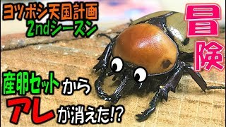 クワガタ&カブトムシ&昆虫採集 産卵セットからアレが消えた!?ヨツボ...