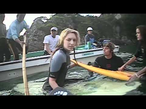 Download The Cove (2009)