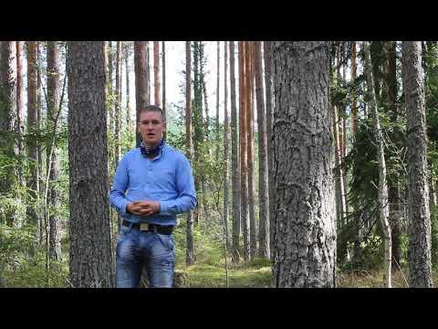 Metsakasvatuse ABC (Metsa tulevik)