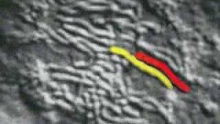 division cellulaire