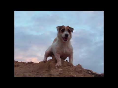 Jesse's Webisode: I need a Hero! - Mini Movie Animal Acting